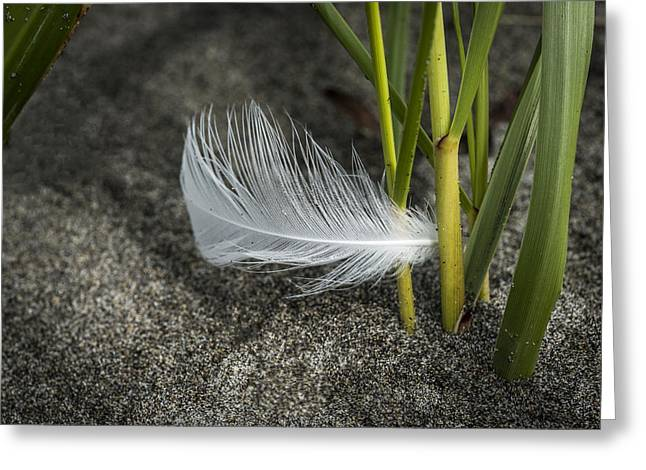 Feather And Beach Grass Greeting Card