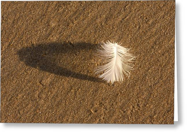 Feather Arch Greeting Card