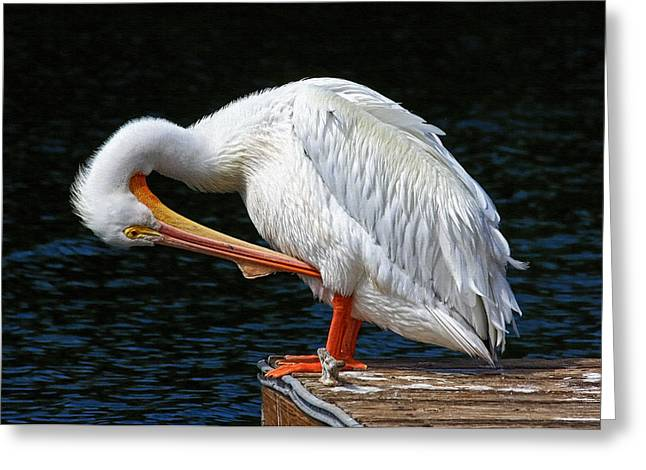 Feather Check Greeting Card by HH Photography of Florida