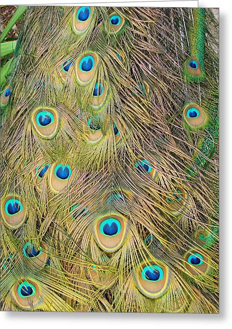 Greeting Card featuring the photograph Feather Finesse by Margaret Bobb