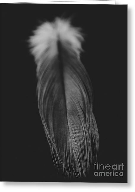 Feather In Black And White Greeting Card