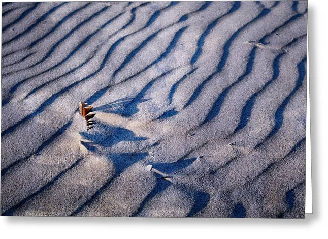 Greeting Card featuring the photograph Feather In Sand by Michelle Calkins