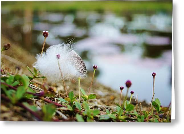 Feather Greeting Card by Lynda Dawson-Youngclaus
