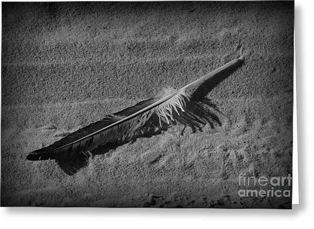 Feather On The Sand Greeting Card by Paul Ward