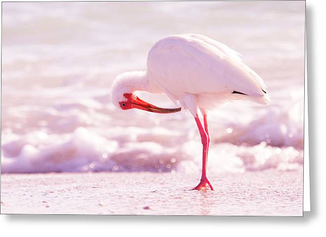 Feather Out Of Place Greeting Card by Betsy Knapp