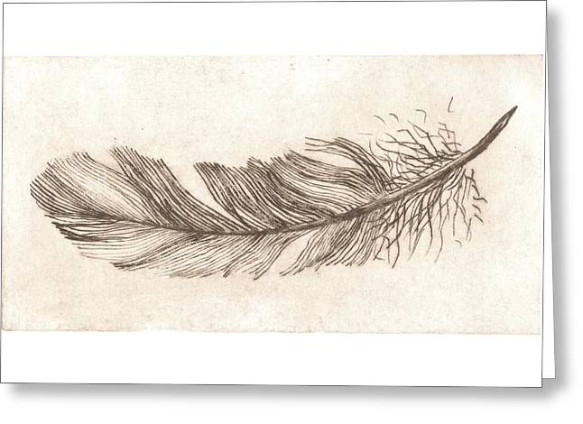 Feather Study In Sepia Greeting Card by Lisa Le Quelenec