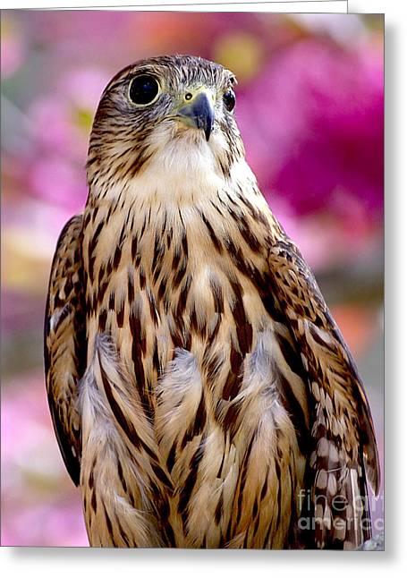 Feathered Wizard Greeting Card by Liz Masoner