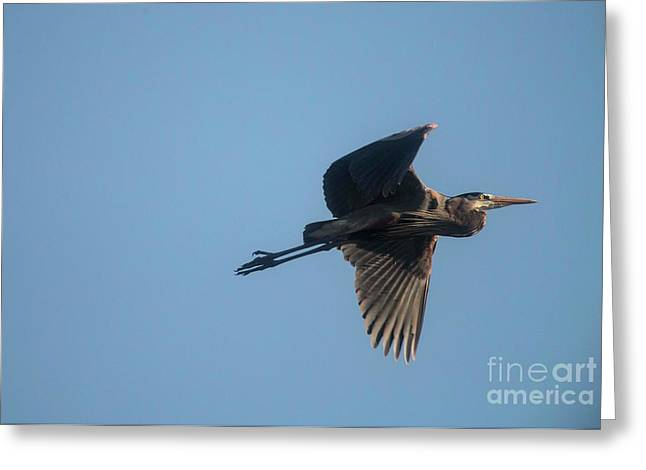 Greeting Card featuring the photograph Feathering The Nest by David Bearden