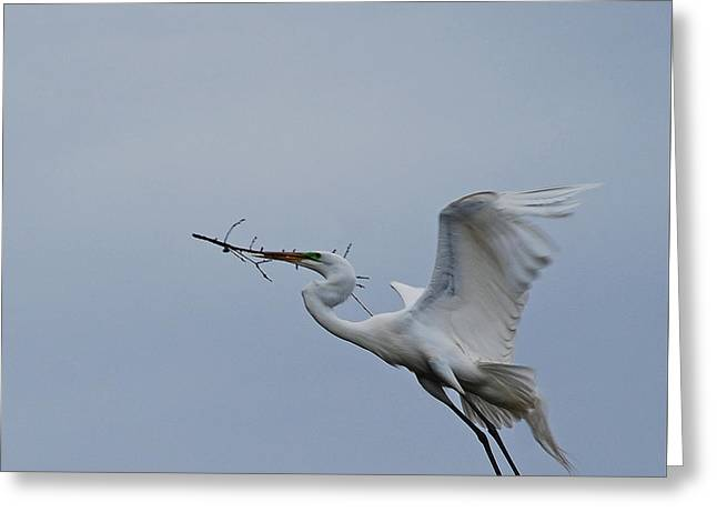 Feathers 8-3 Greeting Card by Skip Willits