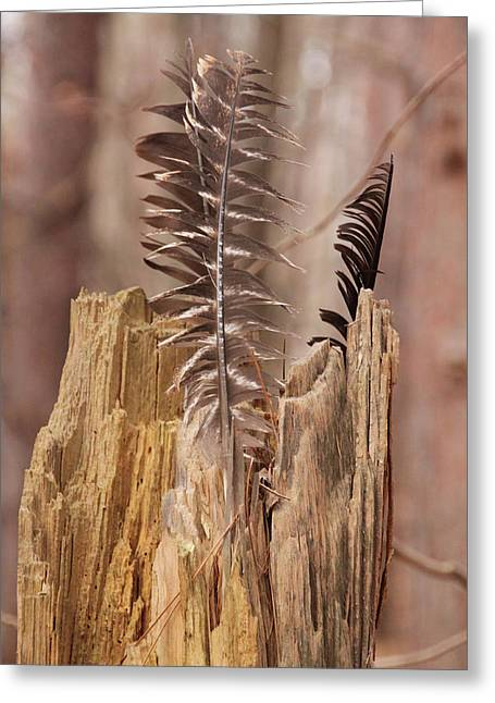 Feathers And A Stump. Casey Park, Ontario, Ny Greeting Card
