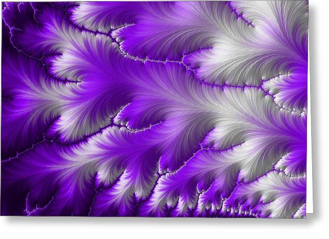 Feathers Greeting Card by Darren Hayes
