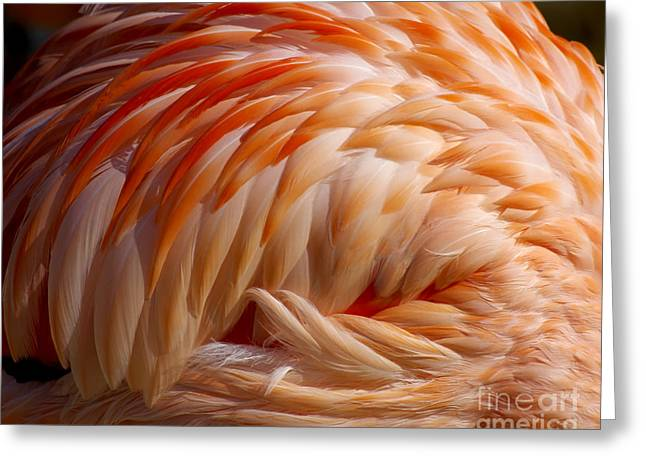 Feathers Of Pink Greeting Card