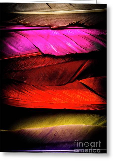 Feathers Of Rainbow Color Greeting Card