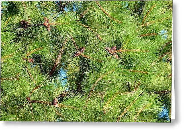 Feathery Pine Needles Greeting Card by Will Borden