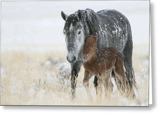 February Colt Greeting Card
