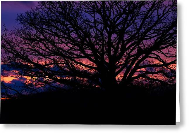 February Sunset Greeting Card