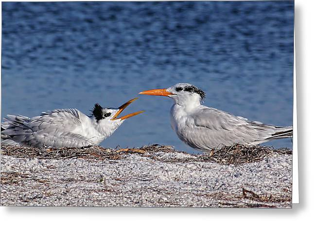 Feed Me Greeting Card by HH Photography of Florida
