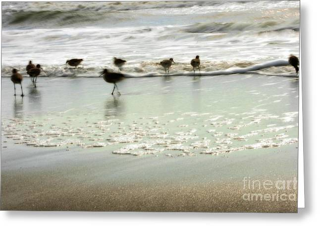 Plundering Plover Series 2 Greeting Card by Angela Rath