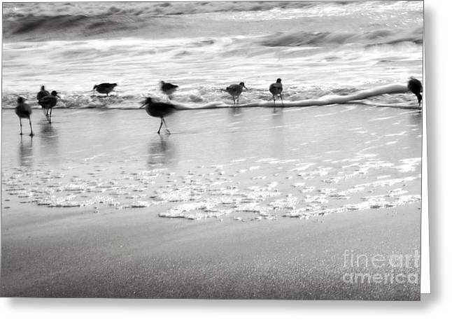 Plundering Plover Series In Black And White Greeting Card by Angela Rath