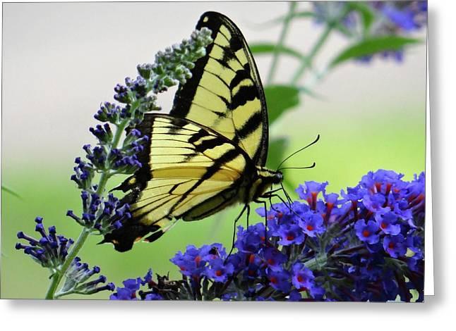 Feeding From A Nectar Plant Greeting Card