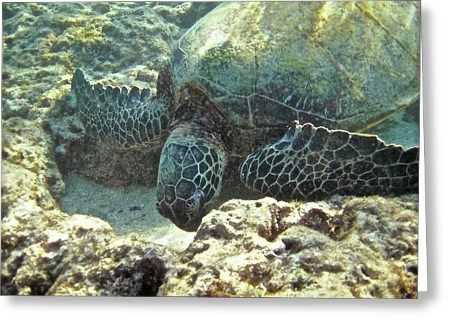 Feeding Sea Turtle Greeting Card by Michael Peychich