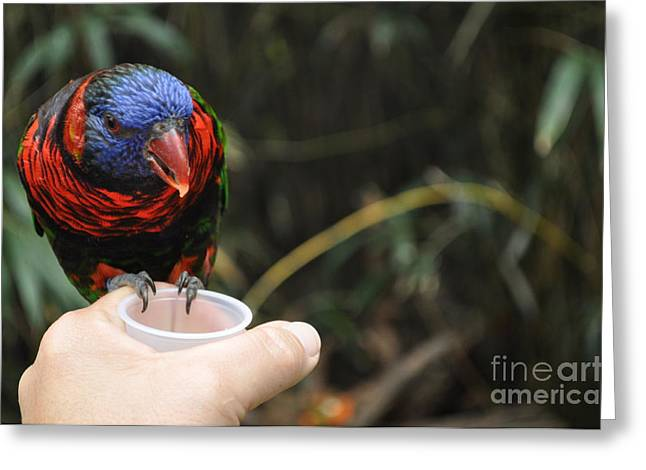 Feeding The Birds Greeting Card
