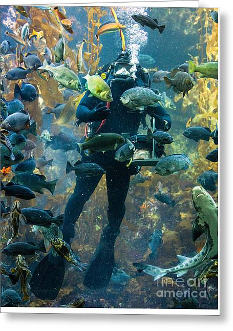 Feeding Time At The Monterey Bay Aquarium Greeting Card by Jerry Fornarotto
