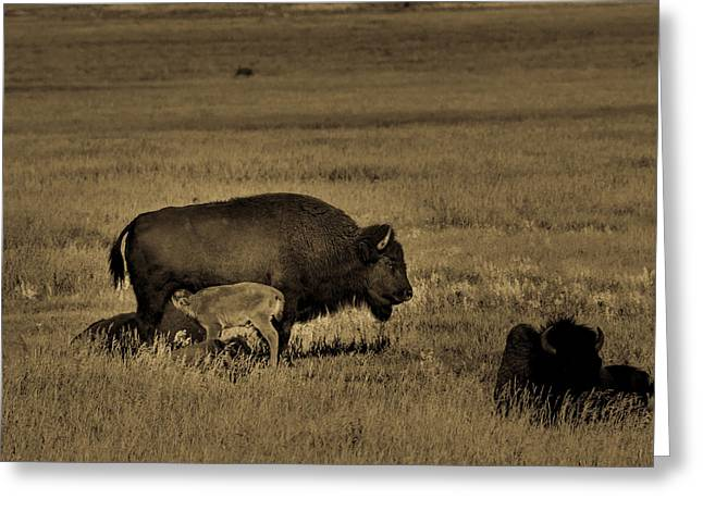 Feeding Time On The Prairie Greeting Card by TL Mair
