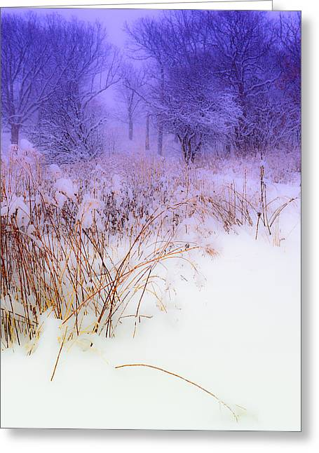 Feel Of Cold Land Greeting Card
