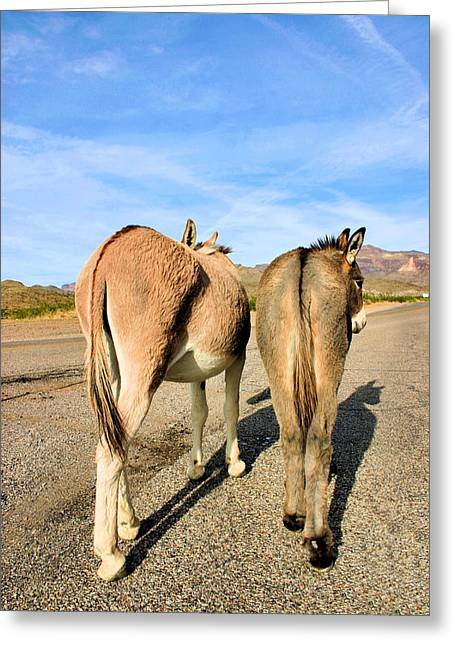 Burros Greeting Cards - Feelin a Little Behind Greeting Card by Kristin Elmquist