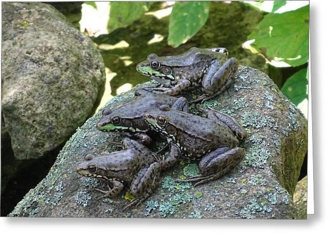 Feeling A Little Froggy Greeting Card