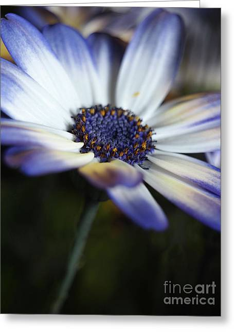 Feeling Blue In The Garden Shadows 2 Greeting Card by Dorothy Lee