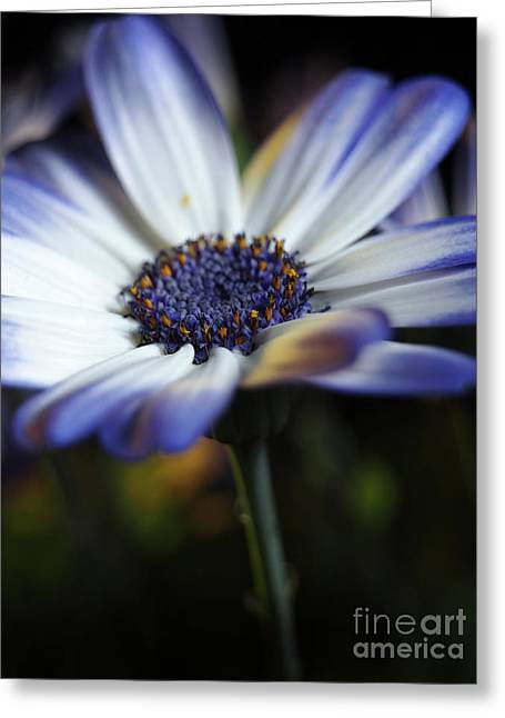 Feeling Blue In The Garden Shadows Greeting Card by Dorothy Lee