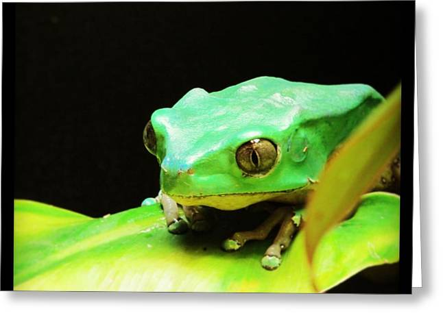 Feeling Froggy Greeting Card
