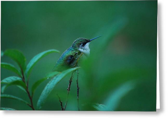 Feeling Green Greeting Card by Lori Tambakis