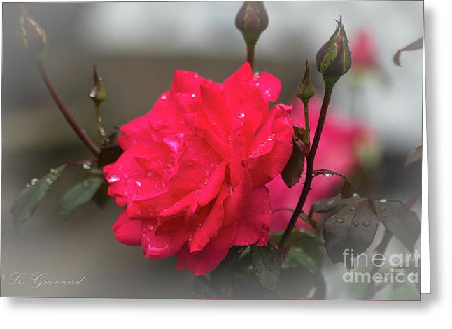 Feeling Rosy Greeting Card