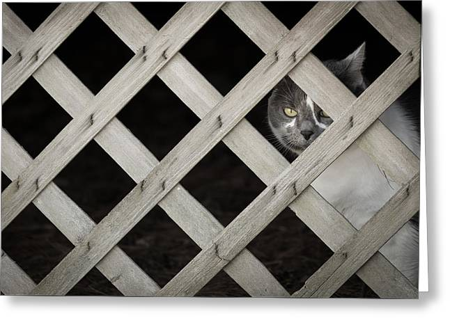 Feline Fence Greeting Card