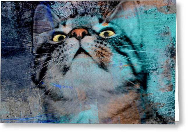 Feline Focus Greeting Card by Kathy M Krause