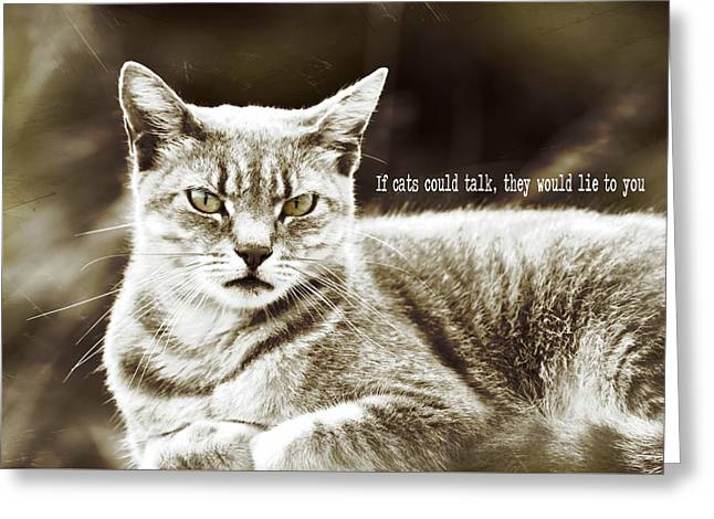 Feline Moment Quote Greeting Card by JAMART Photography