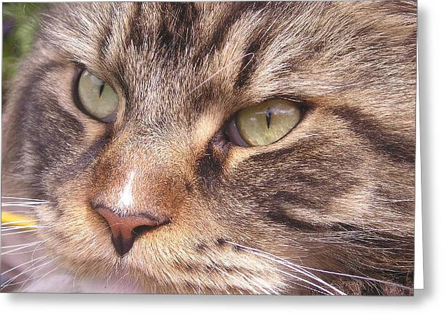 Feline Perfection Greeting Card by Joanne Simpson