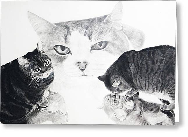 Felines Greeting Card by Raymond Potts