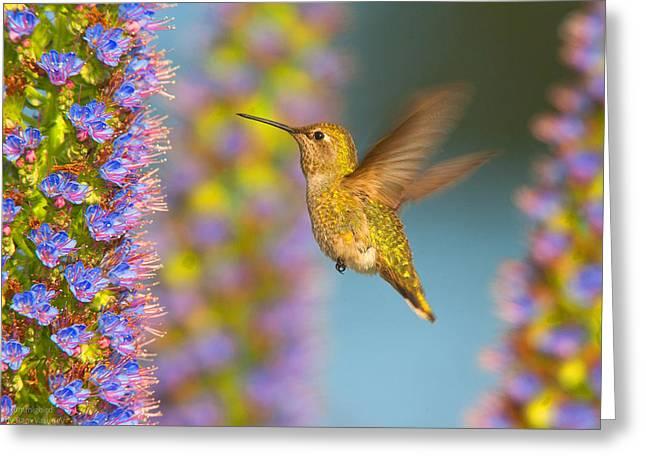 Female Anna's Hummingbird Huntington Beach California Greeting Card