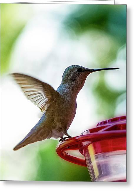 Greeting Card featuring the photograph Female Anna's Hummingbird V24 by Mark Myhaver