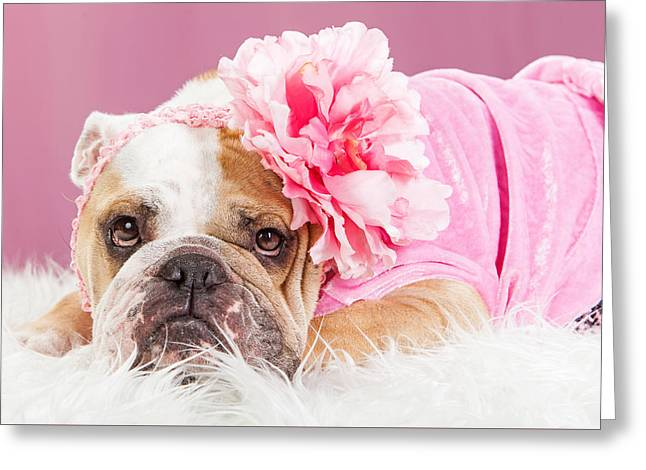 Female Bulldog Wearing Pink Outfit And Flower Greeting Card by Susan Schmitz