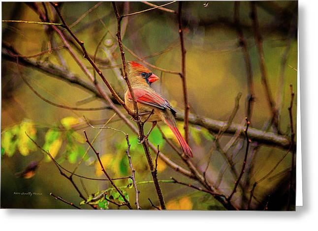 Female Cardinal #1 Greeting Card