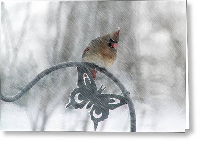 Female Cardinal In 2016 Blizzard Greeting Card by Ericamaxine Price