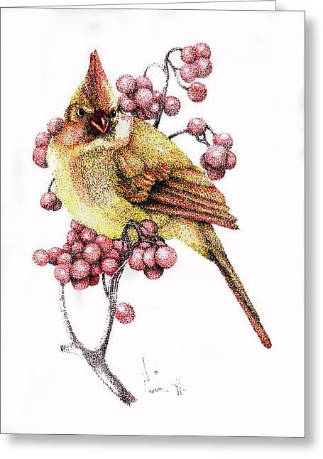 Female Cardinal Greeting Card by Preston Shupp