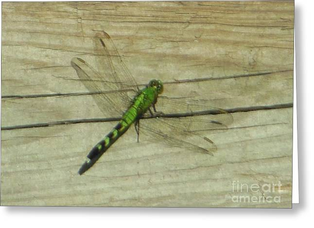 Female Eastern Pondhawk Dragonfly Greeting Card