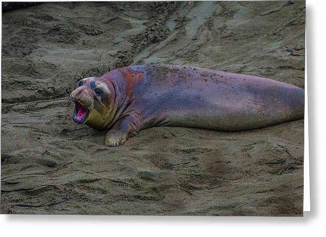 Female Elephant Seal Greeting Card