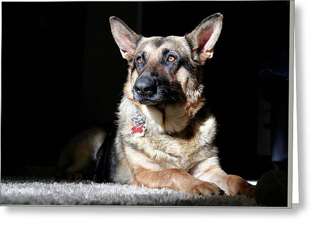 Female German Shepherd Greeting Card